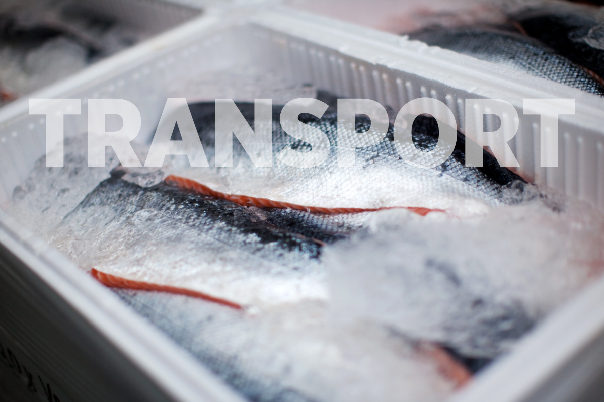 transport seafood