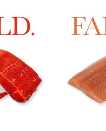 wild vs. farm salmon