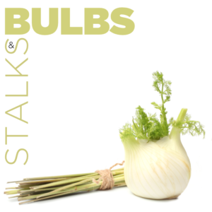 Spicedex™ - Bulbs and Stalks